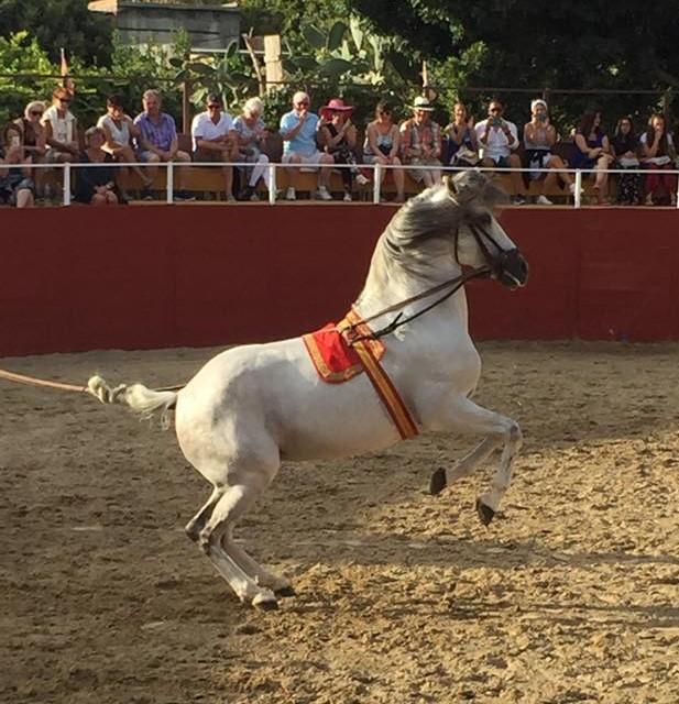 Häst hoppar till rollupp
