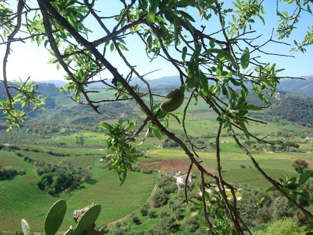 Med unnadigresan.se på kulinarisk utflykt i Andalusien. Under avokadoträdet. Vinprovning och kattklappning